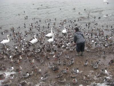 おいしそうな鴨