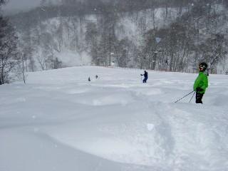ぶなのコブは新雪に埋まっていた
